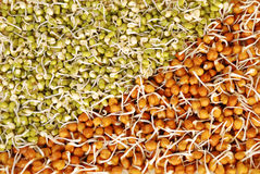 Sprouts Salad Royalty Free Stock Photography