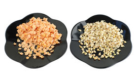 sprouts of seeds on plate Royalty Free Stock Photography
