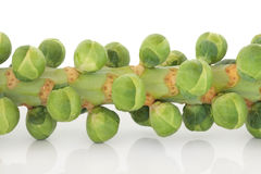 Sprouts on a Stem Royalty Free Stock Image