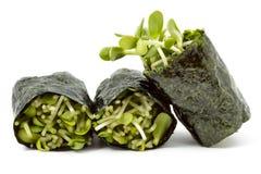 sprouts sunflower royaltyfria bilder