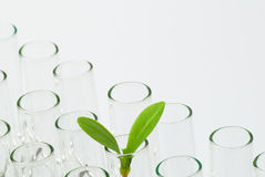 Sprouts on test tube Stock Photography