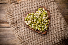 Sprouts. Stock Photos