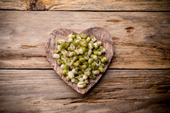 Sprouts. Stock Photo