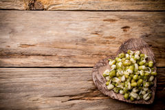 Sprouts. Stock Photography