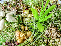 Sprouts variety with almonds stock image