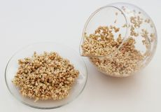 Sprouts and a very useful buckwheat. Sprouts and a very useful green buckwheat Stock Image