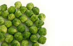 Sprouts on white background Royalty Free Stock Photography