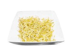 Sprouts in white dish to creative for design and decoration royalty free stock image