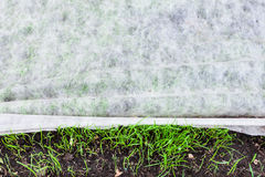 Sprouts of young green grass under nonwoven fabric. For mulching Stock Images