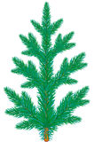 Spruce. Blue spruce tree on white background Royalty Free Stock Images