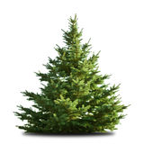 Spruce. Tree isolated on white stock photos