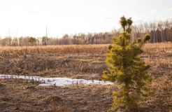 spruce arkivfoton