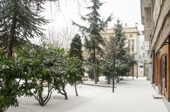 Spruce alley under the snow in Pomorie, Bulgaria royalty free stock image