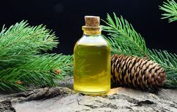 Spruce aroma oil bio organic relax massage. Spruce aroma oil relax massage alternative medicine stock images