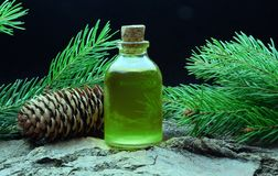 Spruce aroma oil bio organic relax massage. Spruce aroma oil relax massage alternative medicine royalty free stock images