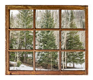 Spruce and aspen in winter Stock Image