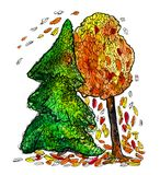 Spruce and autumn tree with falling leaves. Romance. Watercolor. Graphic drawing of watercolor Royalty Free Stock Photo