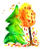 Spruce and autumn tree with falling leaves. Romance. Watercolor Royalty Free Stock Photo