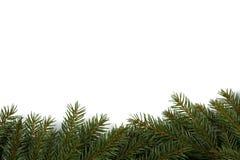 Spruce background