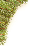 Spruce background Royalty Free Stock Photo