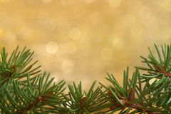 Spruce background Royalty Free Stock Image