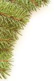 Spruce bakgrund Royaltyfri Foto