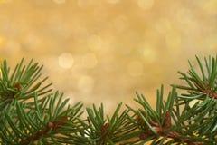 Spruce bakgrund Royaltyfri Bild
