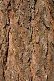Spruce bark Royalty Free Stock Image