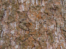Spruce bark background Stock Photos