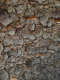 Spruce bark Royalty Free Stock Photos