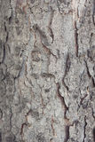 Spruce bark Royalty Free Stock Photography
