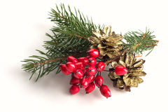 Spruce, berries, pine cones on white Royalty Free Stock Photos