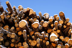 Spruce and Birch Wood Energy. Spruce and pine logs of different size piled up with some snow on them. Bright blue sky on the background. Photographed in Pertteli royalty free stock images