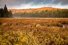 Spruce Bog Royalty Free Stock Image