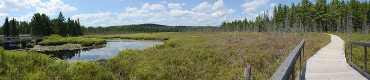 Spruce Bog Stock Photography