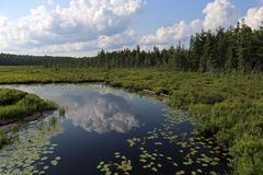 The Spruce Bog. As seen from  Boardwalk in Algonquin Provincial Park, Ontario, Canada stock photography
