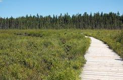 Spruce Bog Boardwalk Stock Photography