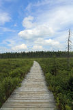 Spruce Bog Boardwalk Stock Images