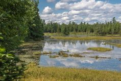 Spruce Bog Colours in july. View from the Spruce Bog boardwalk on the spruce bog trail in Algonquin Park Ontario. Greens, white, blues and yellows from the dense royalty free stock photo