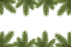 Spruce border Stock Photos