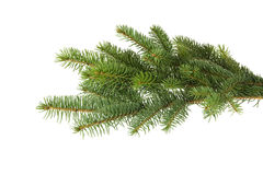 Spruce Branch Stock Photography