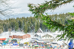 Spruce branch on the background of the ski resort Stock Photography
