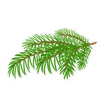 Spruce branch Christmas tree  Stock Photos