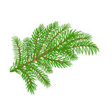Spruce branch Christmas tree vector illustration Royalty Free Stock Images