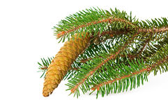 Spruce branch with cone isolated Royalty Free Stock Photos