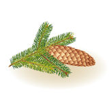 Spruce branch. With cone on a white background Royalty Free Stock Photo