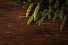 Spruce branch with cone Stock Image