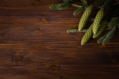 Spruce branch with cone Royalty Free Stock Image