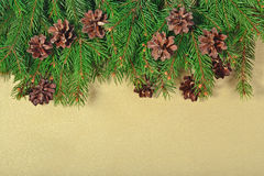 Spruce branch and cones Royalty Free Stock Images