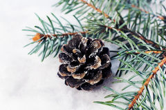 Spruce branch with cones in the snow closeup Stock Image